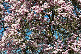 spring-211635__180